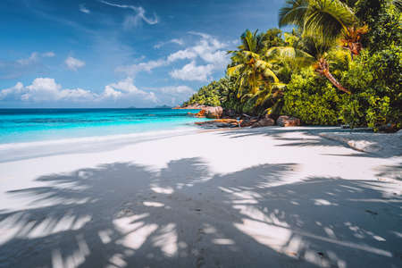 Palm tree shadow on tropical tranquil beach with powdery white sand, crystal clear blue ocean lagoon and palm trees in background. Vacation and lifestyle concept.