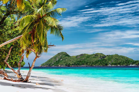 Luxury vacation scene on tropical island. Paradise beach with white sand and palm trees. Long distance travel tourism getaway concept