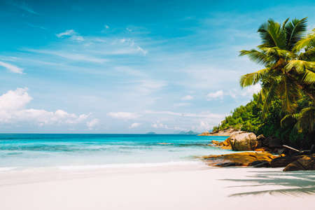 Tropical pristine tranquil beach with powdery white sand, crystal clear ocean water and palm trees. Summer season vacation and lifestyle concept. Stok Fotoğraf