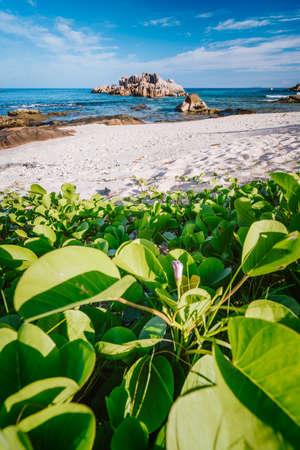 Grand L Anse, La Digue, Seychelles. Hidden beach with green foliage and unique huge granite rocks, sandy beach and ocean lagoon Reklamní fotografie