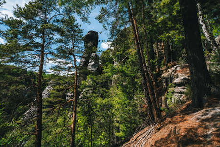 Rock with climber silhouette in famous Bastei rock formation. National park Saxon Switzerland, Germany. Pine tree forest. Extrem travel experience