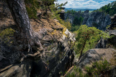 Amazing view of national park Saxon Switzerland, Germany. Bizarre pine tree roots on abyss with panorama to famous Bastei sand stone mountains in spring season Archivio Fotografico