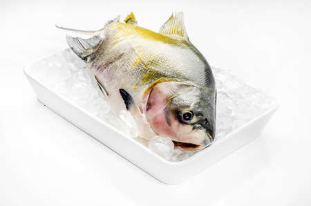 pacu: Pacu fish, fresh fish
