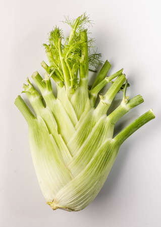 fennel: fennel Stock Photo