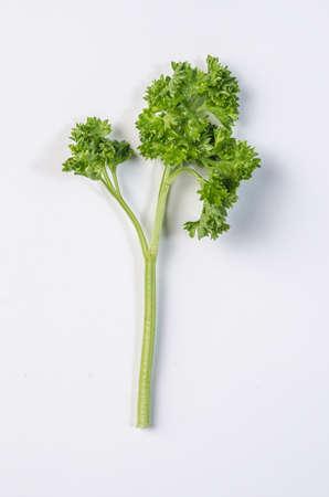 crinkly: crinkly parsley