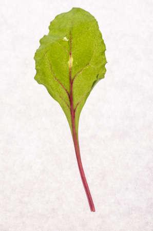remolacha: hojas de remolacha Foto de archivo