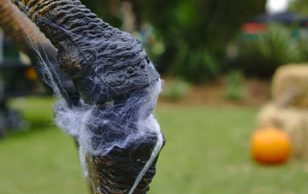 Artificial muscle joint of a leg full of cobwebs as Halloween decoration Stock fotó