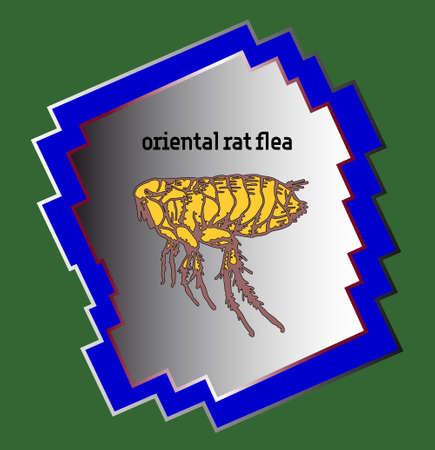 Oriental rat flea in blue frame on green background
