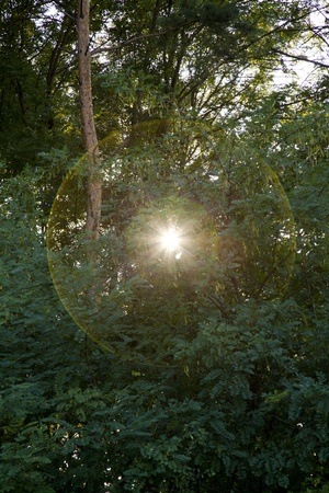 lens flare from sun with rays bursting from a forest Stock Photo