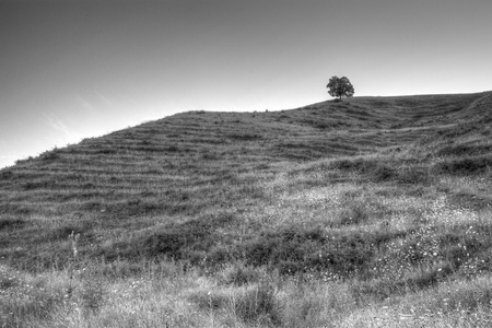 black and white shot of lone tree on hills
