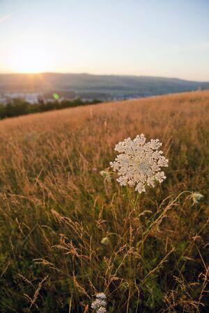 white single flower facing the sunset