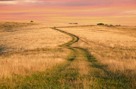 dry grass: african savannah road on bright red sunset