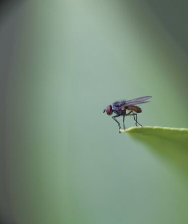 macro of a fly standing on the edge of a leaf preparing to take off Stock Photo - 10543223
