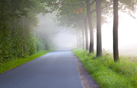 free road in the morning in a forest with mist  Stock Photo - 10574079