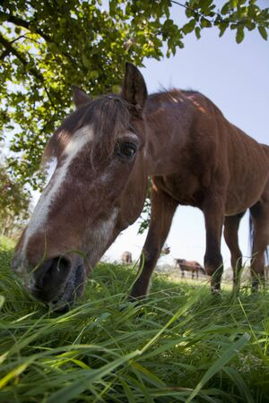 horse grazing on a sunny day in the shade under a tree