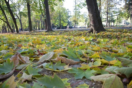 fallen leaves on a park alley in autumn