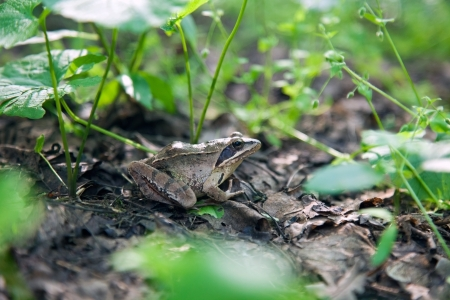 forest frog on the ground with plants near it Stock Photo