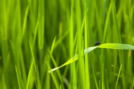 fly on a leaf between grass background Stock Photo