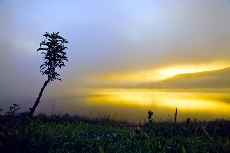 sunrise on a foggy lake with a young tree on the bank