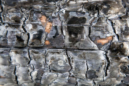 chared wood background wtih black ash Stock Photo - 16058381