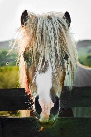 horse head close up at sunset in a rural yard Stock Photo - 17347164