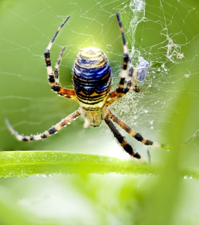 spider with the rainbow colours sitting on his web Stock Photo - 17347148