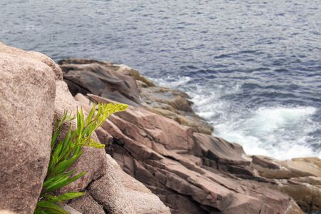 plant growing from the rock alone on the sea shore Stock Photo - 17347150