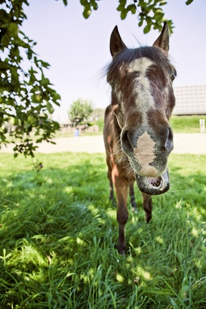 horse smilling at the camera under a tree on a sunny day Stock Photo - 17347162