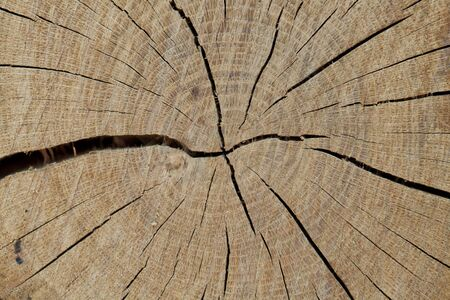 Close up of wood stump dried and cracked