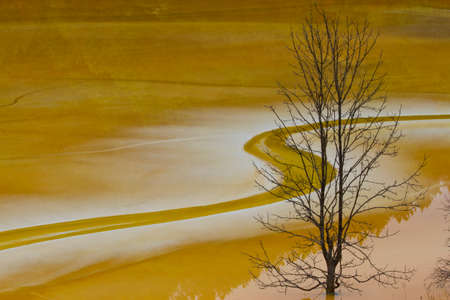 polution: dry tree in poluted water lake red colour