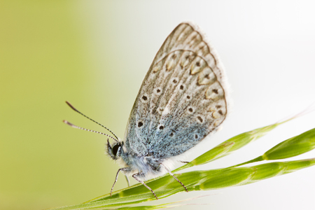 Butterfly close up isolated on green background on grass