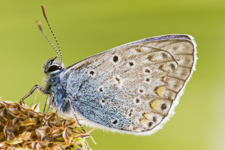 close up of butterfly in green grass isolated alone