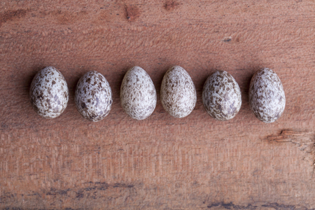 sparrow egg put in a line isolated on a wood background