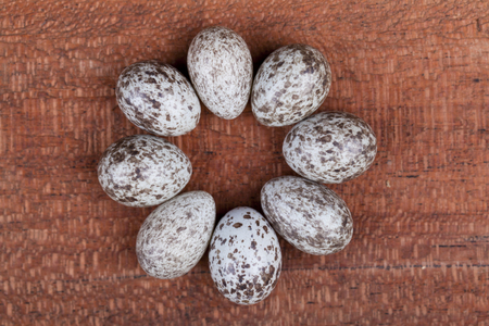 circle of spotted eggs on a wood background Stock Photo