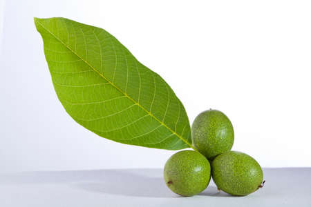 green walnut with leaf isolated on white background