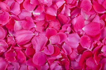 pink rose petal background macro close up