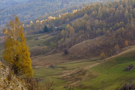 yellow autumn  tree in romanian mountains Stock Photo