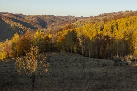 autumn forest in romanian hills with red and yellow trees