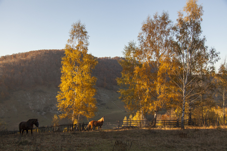 horses on hill at sunset in autumn with red and yellow plant