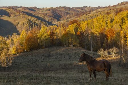 horse on hill with colorfull forest in background at sunset