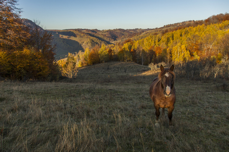 horse facing camera with autumn colorfull forest in background