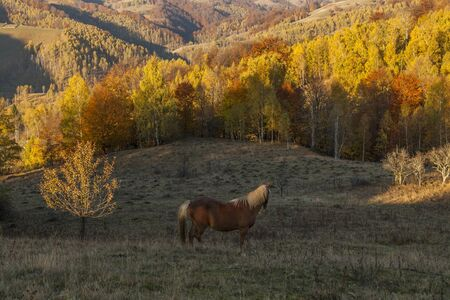 lone horse on hill with autumn forest in background Stock Photo