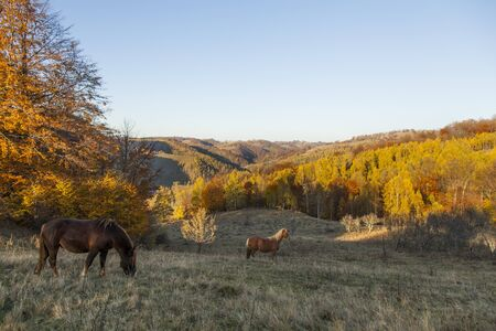 horses on hill with autumn forest in background at sunset