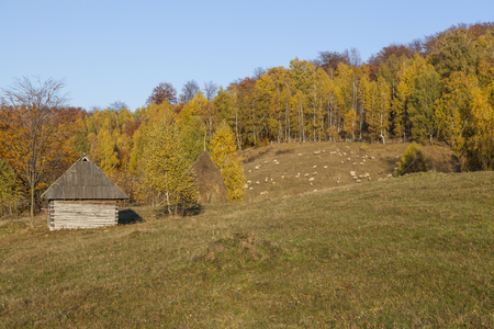 autumn forest with small house in village Stock Photo