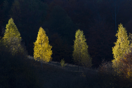 autumn trees on hill with bright colors with different shades