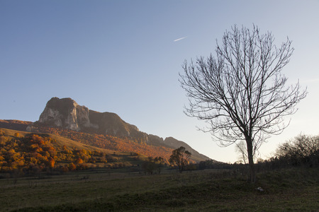 mountain in romania at sunset with dried tree in foreground