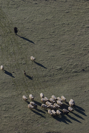 aerial view of woman and sheep herd with big shadows