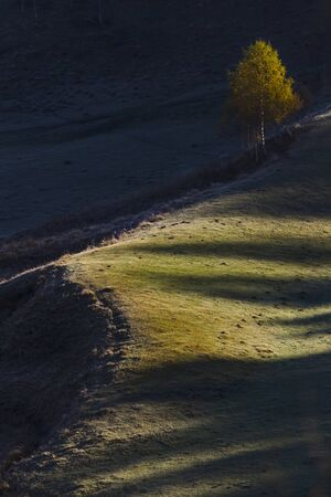 lone autumn tree on a hill at sunrise