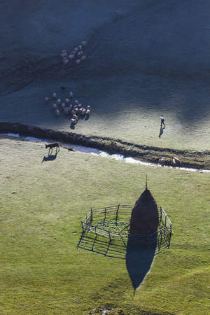 shepard with flock seen from above