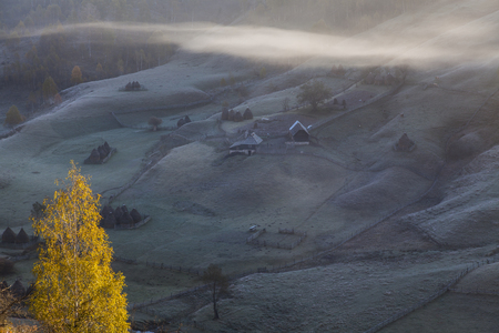 autumn carpathian hills in fog with bright tree in foreground